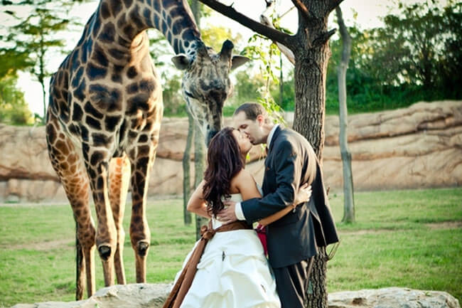 zoo-wedding